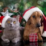 Pet-Friendly Holiday Decorating: 5 Things to Avoid